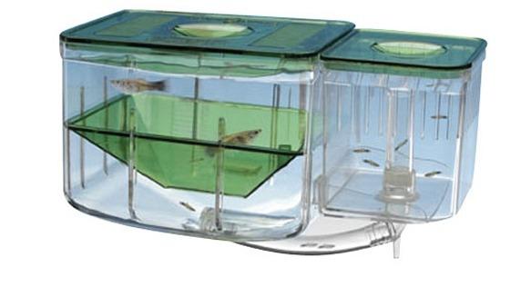 paridera automatica para acuarios peces en